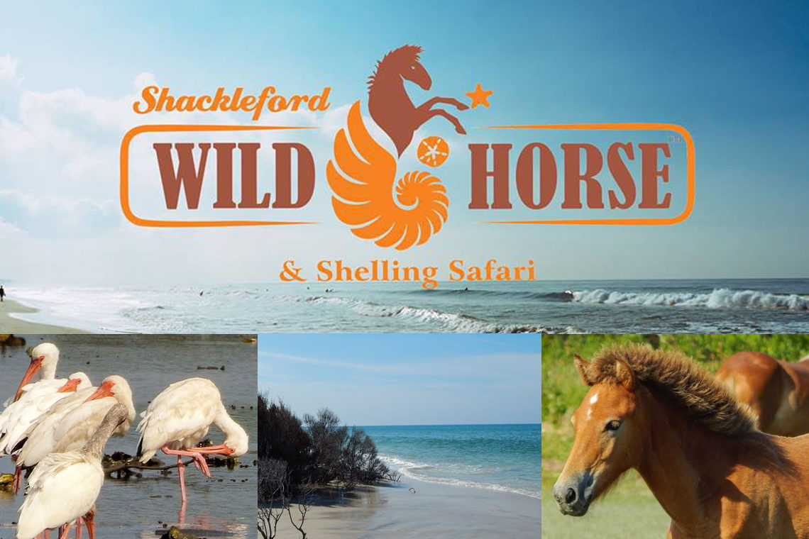 Shackleford Wild Horse & Shelling Safari