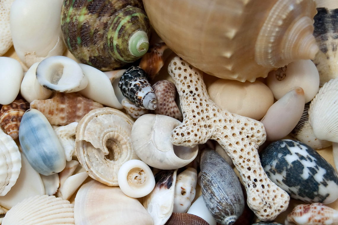 Shelling New Bern - NewBern.com